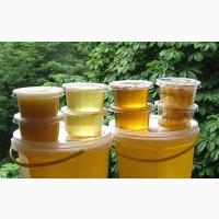 Продам мед липовый