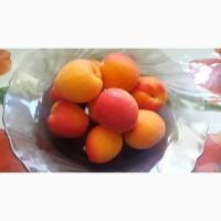 Продам саджанці абрикосу сорт Цунамі