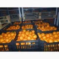 Продам мандарин климентинка