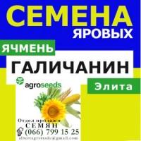 Семена ячменя Галичанин от производителя. Агротрейд/Agroseeds