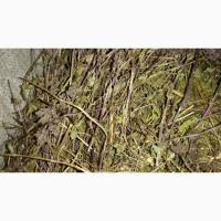 Продам траву материнки, траву грицики, траву розхідника