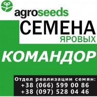 Вакула, Командор, Всесвит, Галичанин. Семена от производителя / без перекупов