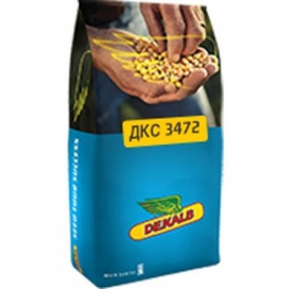 Семена Кукурузы ДКС 3472 (DKC 3472)
