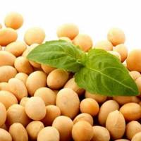 Закуповуємо сою. ГМО та неГМО