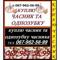 Куплю часник товарний та однозубку часнику по Україні
