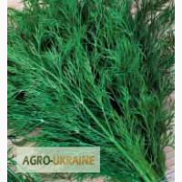 Продам весовые и пакетированные семена Укропа (оптом с первых рук от производителя)