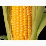 Семена кукурузы Кремень 200