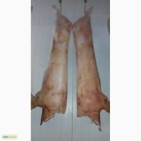 Полутуши свиные