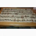 Продам плодных меченых пчеломаток Карпатской породы