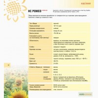 Соняшник Ромео м.Нові Сад (Сербія)