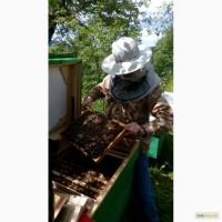 Продам бджолопакети Карпатської породи бджіл, 2017