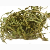 Куплю оптом листя кульбаби (одуванчика), корінь кульбаби