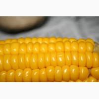 Производим закупку кукурузы по всей территории Украины