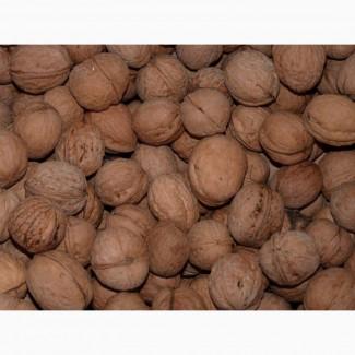 Продам калиброваный грецкий орех 28