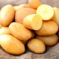 Продам картофель сорт Славянка