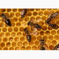 Продадим мёд сбора 2018 года