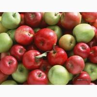 Яблоко для продажи оптом