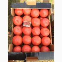 Продам розовый помидор