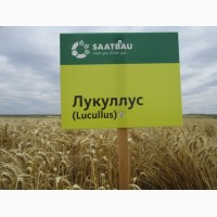 Продам Пшеницю Озиму Лукуллус