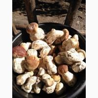 Продаю белые грибы свежие, собираем каждый день