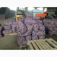 Картофель сорт словянка 75 тонн 6