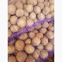 Посадочная картошка Ривьера