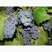 Куплю виноград киев