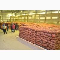 Картофель оптом от фермерского хозяйства в Украине