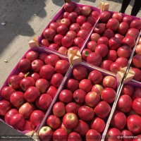 Купим яблоки от 20 тонн партия любые сорта