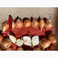Продам репчатый лук урожай 2020
