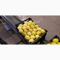 Продам лимон