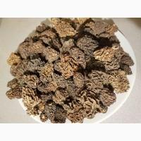 Продам гриби СМОРЧКИ сушені