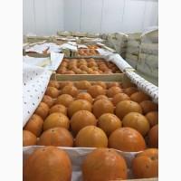 Продам хурму шоколадную Королёк, Узбекистан