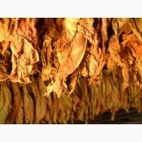ТУРЕЦКИЙ натуральный табак высокого качества