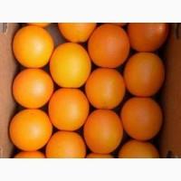 Продам Апельсин опт
