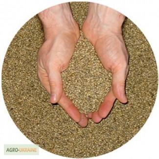 Куплю семена Люцерны