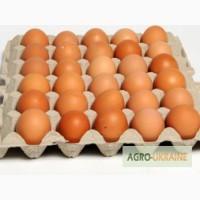 Продам яйца домашней курици