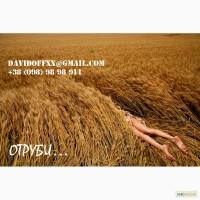 Продаем пшеничные отруби с производства ОПТОМ