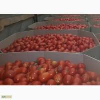 Октабины для помидора