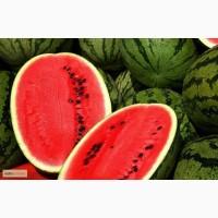 Продам семена Арбуз Антем F1 (Hollar Seeds, США)