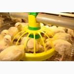 Комбикорм Старт для цыплят бройлера от 0 до 14 дней
