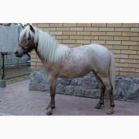 Продам кобылу Шетлендского пони