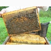 Продам пчелопакеты и семьи на 2018г (Качество, свои пчелы)