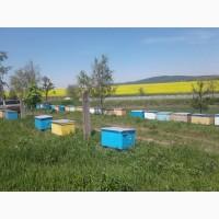 Продам пчелопакеты карпатской породы вучковский тип с Доставкой по Украине 2021