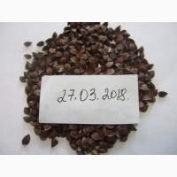 Семена гречихи сорт АРНО
