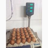 Яйца столовые Экспорт
