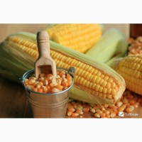 Закупаем на постоянной основе зерновые