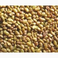 Продам семена люцерны Веселка-1 реп. промагниченная