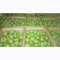 Продам яблука з холодильника сорт Ренет Семеренко