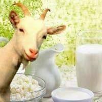 Козье молоко и молочные продукты